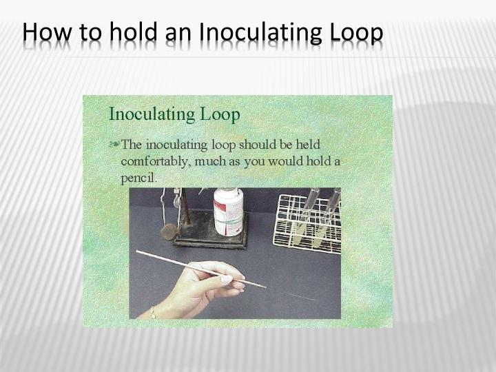 How to hold an Inoculating Loop