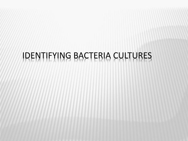 Identifying Bacteria Cultures