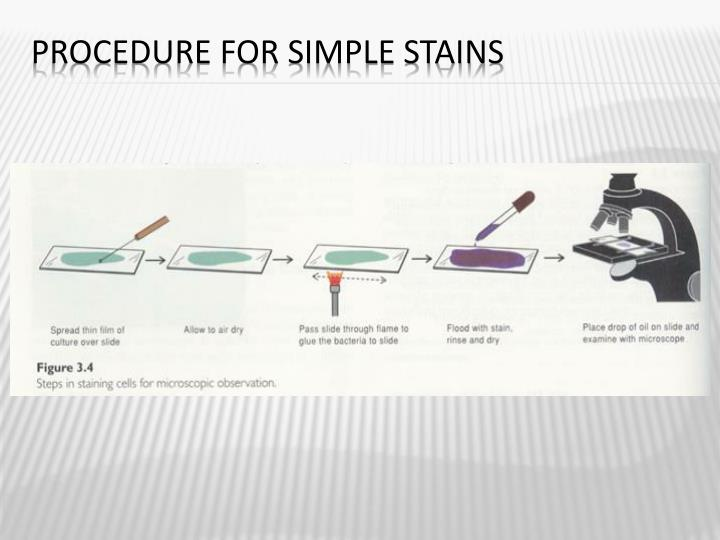 Procedure for Simple Stains