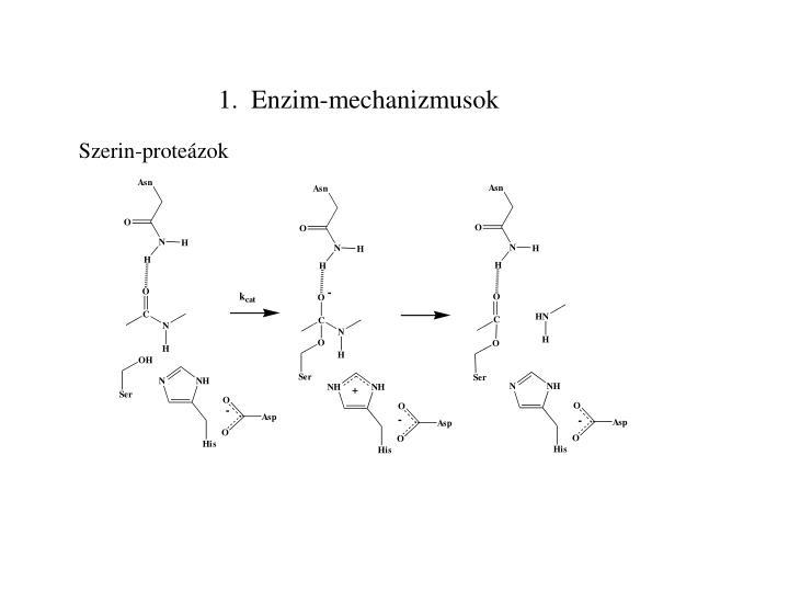 1.  Enzim-mechanizmusok