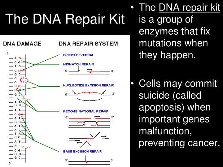 The DNA Repair Kit