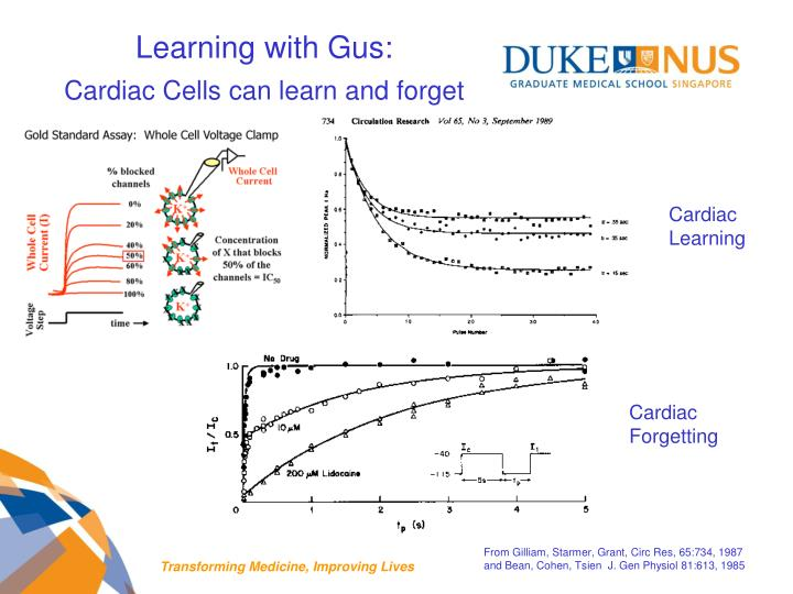 Learning with Gus: