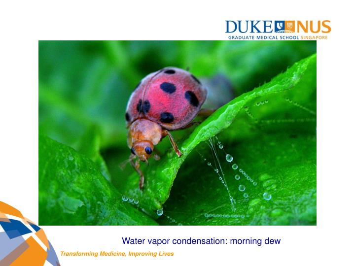 Water vapor condensation: morning dew