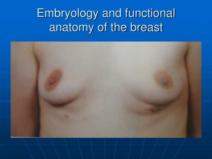 Embryology and functional anatomy of the breast