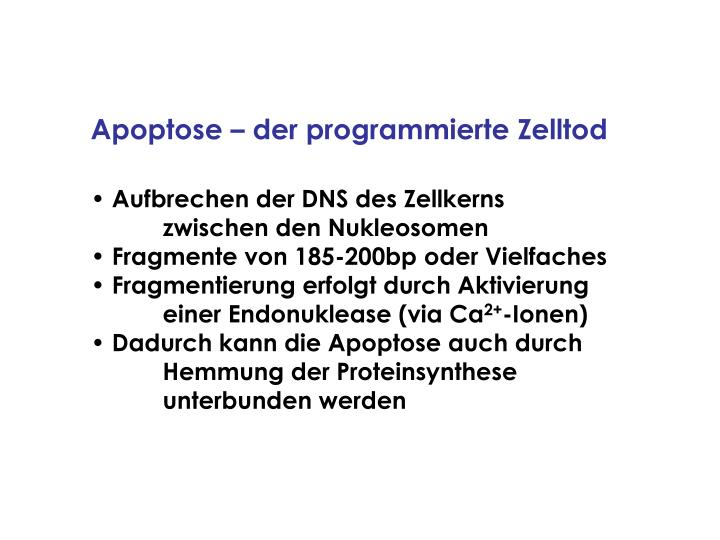 Apoptose – der programmierte Zelltod