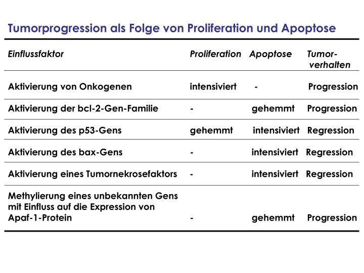 Tumorprogression als Folge von Proliferation und Apoptose