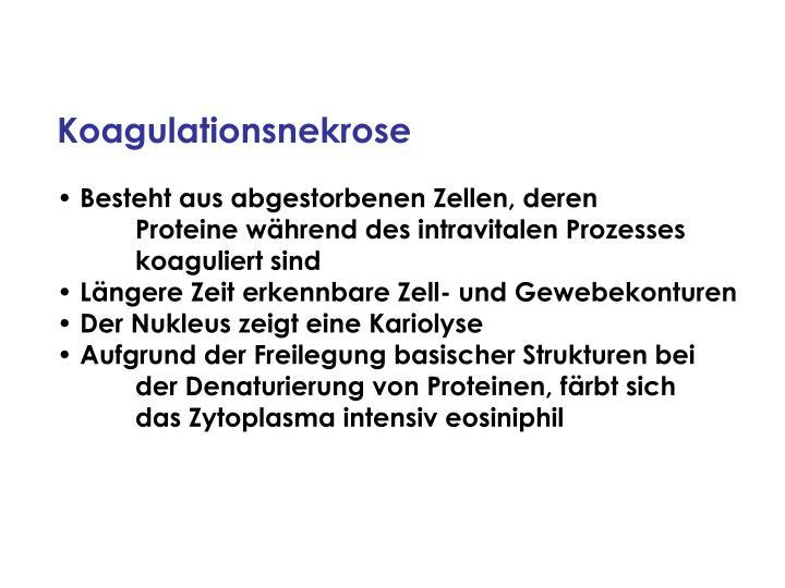 Koagulationsnekrose