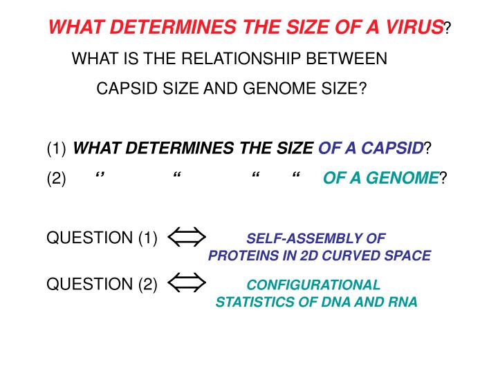 WHAT DETERMINES THE SIZE OF A VIRUS