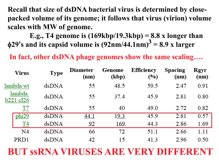 Recall that size of dsDNA bacterial virus is determined by close-packed volume of its genome; it follows that virus (virion) volume scales with MW of genome.    E.g., T4 genome is (169kbp/19.3kbp) = 8.8 x longer than
