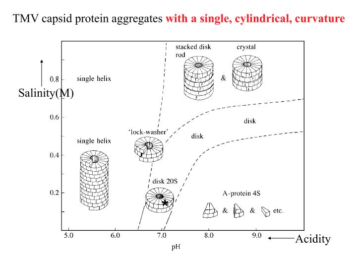 TMV capsid protein aggregates