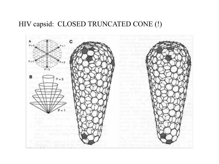 HIV capsid:  CLOSED TRUNCATED CONE (!)
