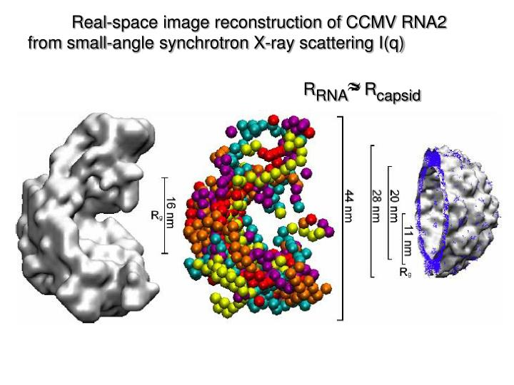 Real-space image reconstruction of CCMV RNA2                      from small-angle synchrotron X-ray scattering I(q)                                     R