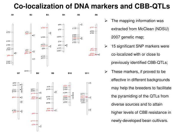 Co-localization of DNA markers and CBB-QTLs