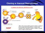 cloning or asexual reproduction
