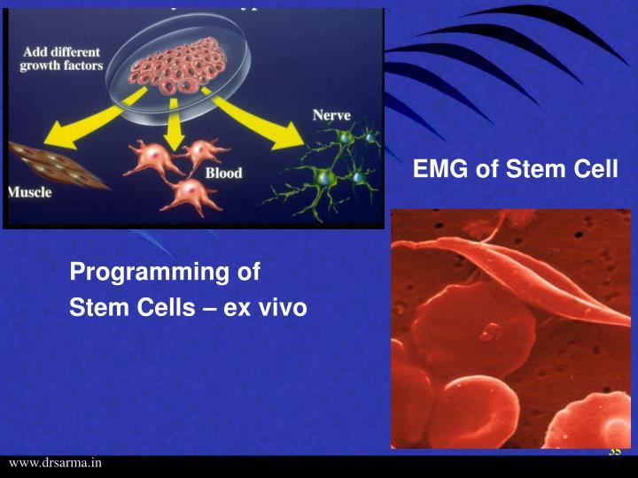Programming of    Stem Cells – ex vivo