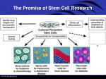 the promise of stem cell research