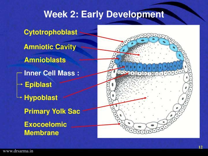 Week 2: Early Development