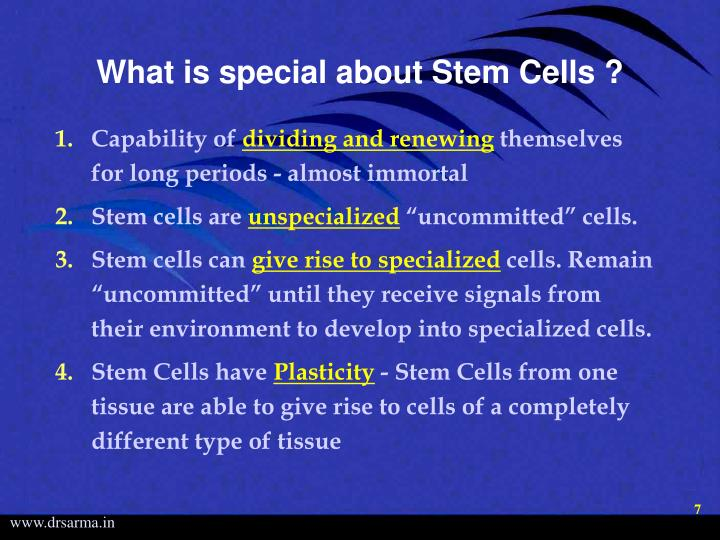 What is special about Stem Cells ?