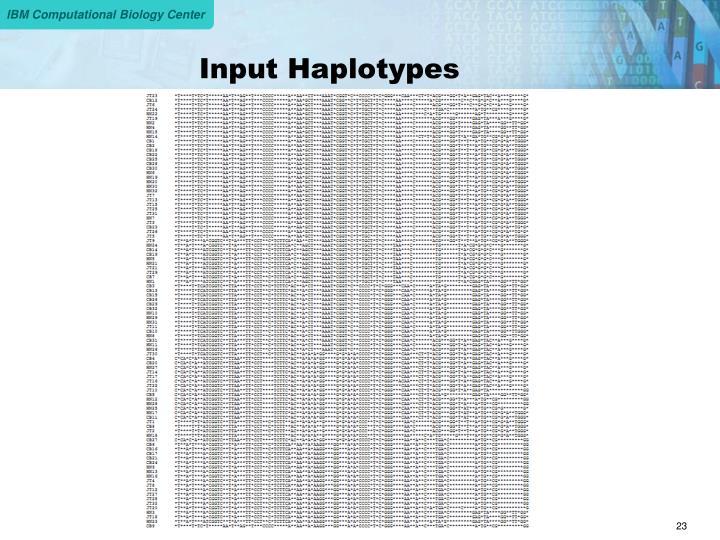 Input Haplotypes