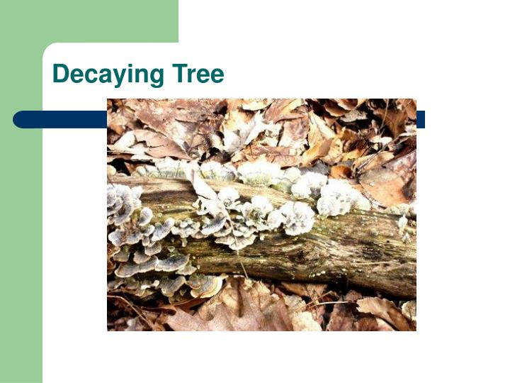 Decaying Tree