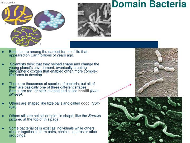 Domain Bacteria