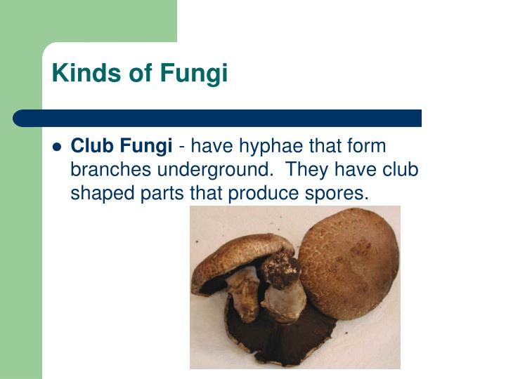 Kinds of Fungi