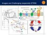images are challenging especially stem