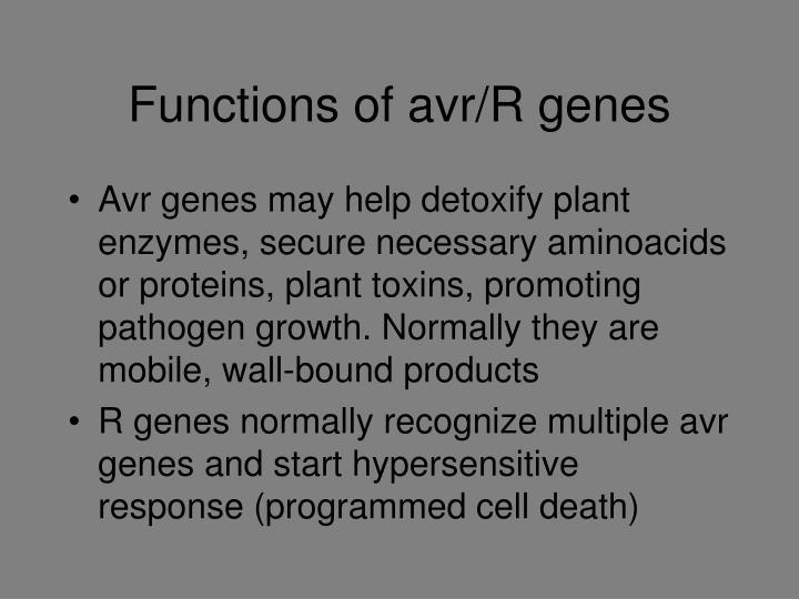 Functions of avr/R genes
