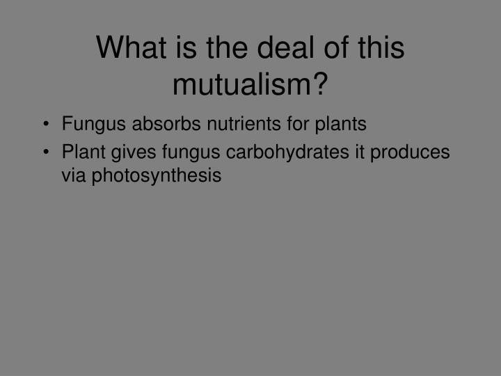 What is the deal of this mutualism?