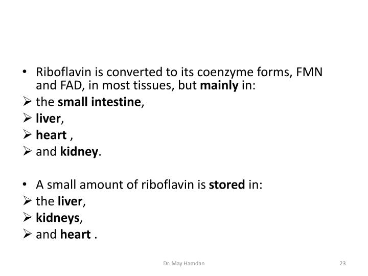 Riboflavin is converted to its coenzyme forms, FMN and FAD, in most tissues, but