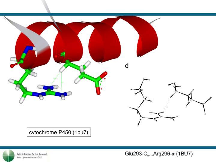 cytochrome P450 (1bu7)