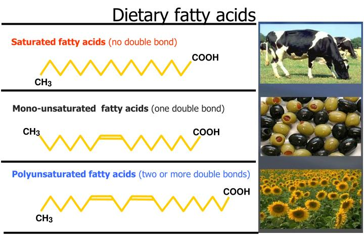 Dietary fatty acids