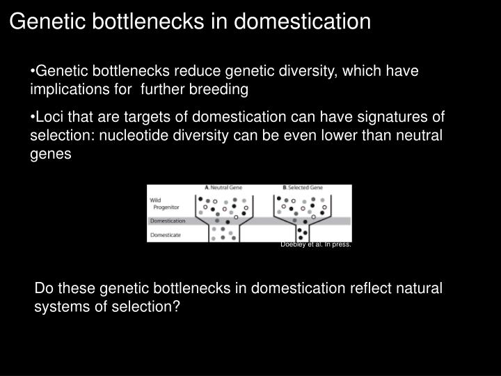 Genetic bottlenecks in domestication