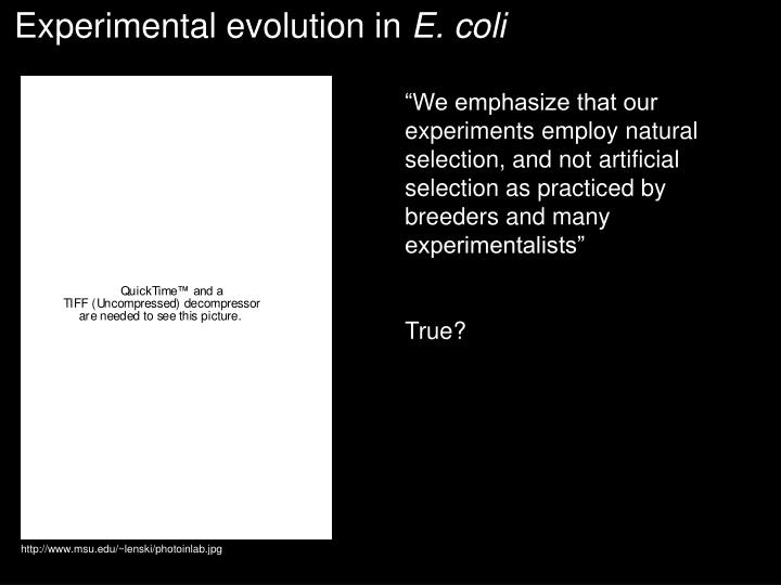 Experimental evolution in