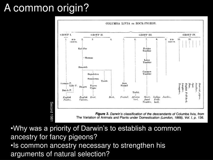 A common origin?