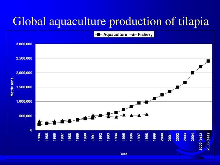 Global aquaculture production of tilapia