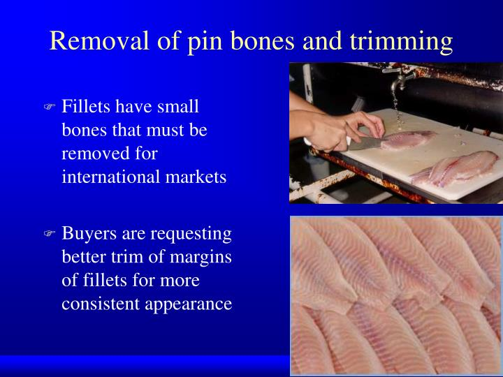 Removal of pin bones and trimming