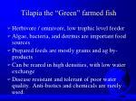 tilapia the green farmed fish