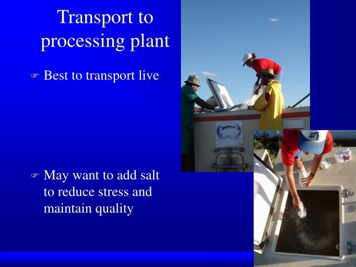 Transport to processing plant