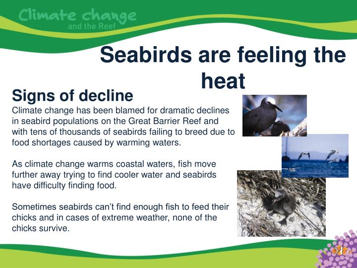 Seabirds are feeling the heat