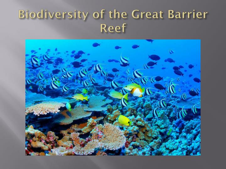 Biodiversity of the Great Barrier Reef