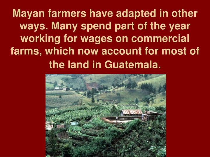 Mayan farmers have adapted in other ways. Many spend part of the year working for wages on commercial farms, which now account for most of the land in Guatemala.