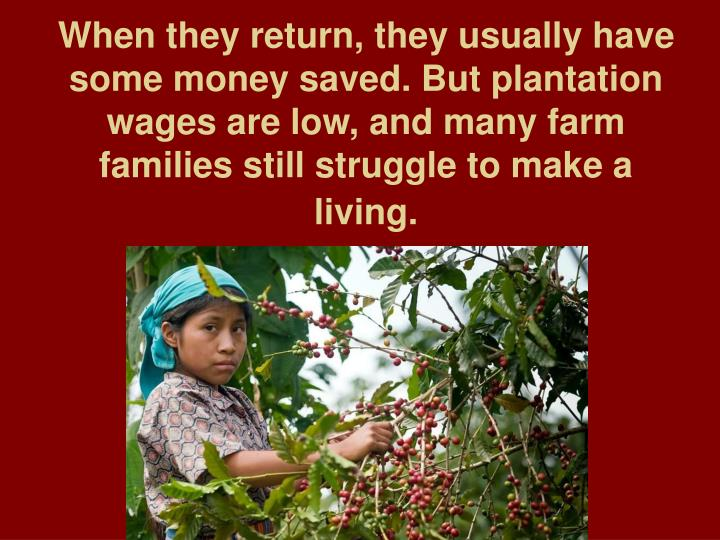 When they return, they usually have some money saved. But plantation wages are low, and many farm families still struggle to make a living.