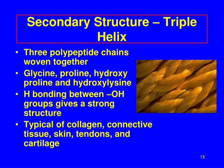 Secondary Structure – Triple Helix