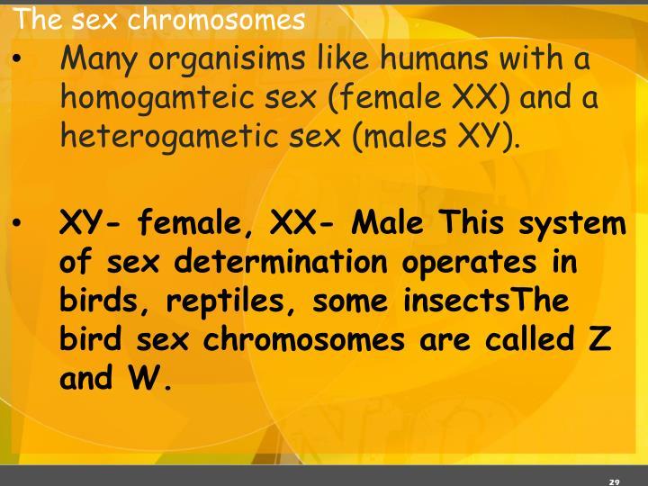 The sex chromosomes