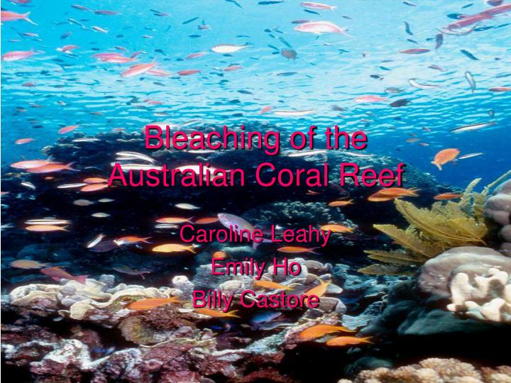 Bleaching of the australian coral reef