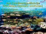 how coral bleaching affects the environment organisms and humans