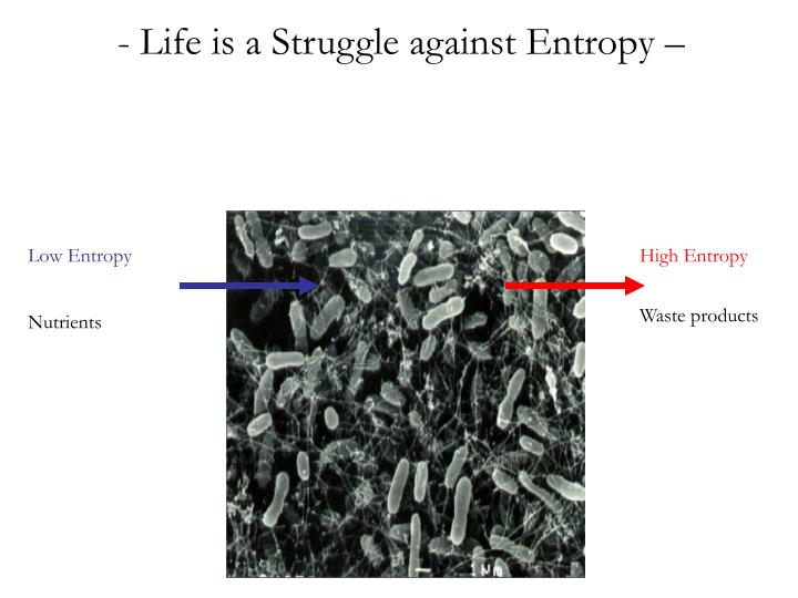 Life is a Struggle against Entropy –