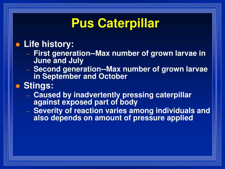 Pus Caterpillar
