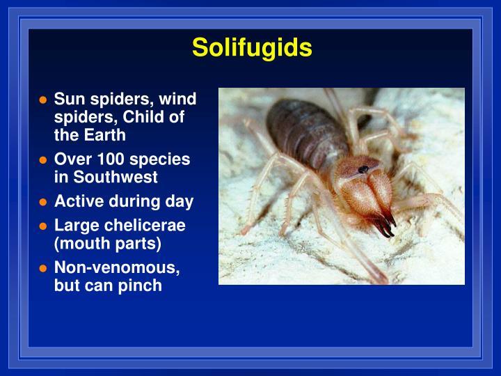 Solifugids